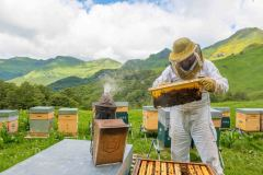 Apiculture - Bougnat Photos
