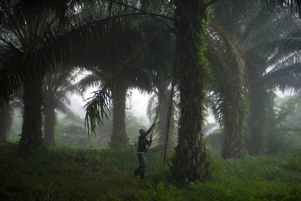 Latex Thailande - Bougnat Photos